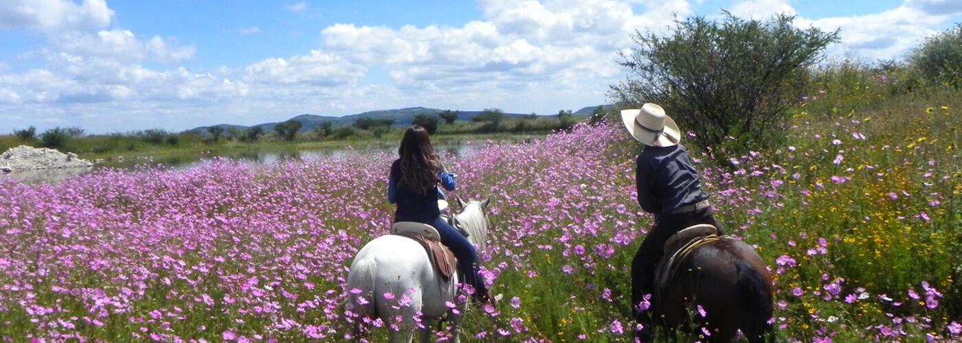 Actividades para Salir de lo Tradicional en San Miguel de Allende